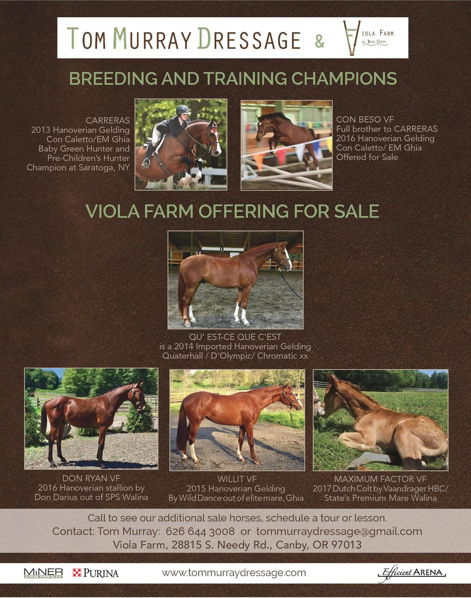 TOM MURRAYDRESSAGE     BREEDING AND TRAINING CHAMPIONS CON BESO VF Full brother to CARRERAS 2016 Hanoverian Gelding Con Ca...